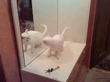 鏡に映った自分にブチ切れるネコ