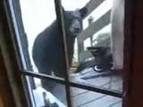 野生のクマを撃退する勇敢なネコ