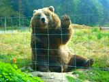 通りすがりの人にも愛想よく手を振ってくれる、とってもフレンドリーなクマさん