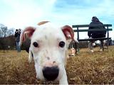 こりゃたまらん!犬の首元にカメラをつけてドッグランで遊んでもらったらこんな素敵な映像が撮れました