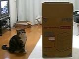大きな箱とねこ