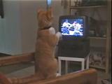 猫パンチ!猫パンチ!ボクシングの試合を見ていると、ついつい手が出ちゃう猫