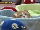 薬物に溺れる猫に密着したドキュメンタリー作品