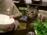 飼い主さんが食べている焼き魚に絶賛ロックオン中の猫