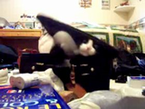 近づくと中に入っている猫ちゃんに攻撃される箱