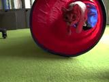 おもちゃに夢中♪ 「猫ミサイル」と化したネコさん