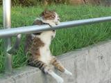 【癒されニャンコ映像】夕暮れの公園で手すりに手をかけてお座りしてウトウトとまどろんでいるいる猫