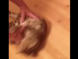 何コレ超楽しい! フローリングを滑るのが大好きになってしまった子猫