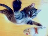 こんなカッコイイ猫動画はじめて(笑)/「跳べない猫は、唯のぬこだ。」