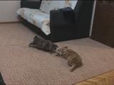 新しい家族に迎えられたウサギさんと仲良くなりたくてシッポを振りつつもビビリまくるコーギー犬が、ふと間合いをつめられてフリーズした後ちょっぴりお漏らしする事案が発生