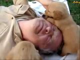 「子犬まみれの刑」に処されて嬉しそうなお父さん