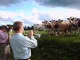 放牧されてる牛さんたちの前でジャズを演奏してみたら意外と好評だった