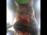 猫「このピザは渡さニャイ!絶対にだ!」