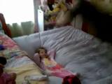 お父さんがベッドにドーンってしたら、ちびっ子がポーンって舞い上がる映像
