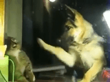 犬パンチ vs 猫パンチ