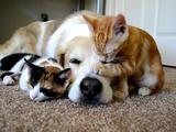 大型犬と子猫の相性はバツグン