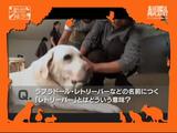 あなたは何問、正解できる?/犬検定-模擬試験(全6問)