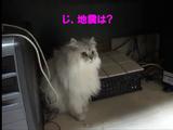 「緊急地震速報」を忘れない猫のジェルちゃん