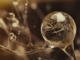 思わず引き込まれる超絶クオリティな美しいCG映像(まるで生きているガラス細工のよう)