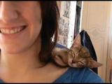 肩の上でウトウトしだした子猫のキーウィをこっそり撮影