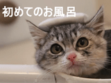「やめて!ナニするにゃ」って言ってたくせに、お湯につかった瞬間からお風呂の気持ち良さに目覚めて、最後は「まだ出ないにゃ♪」ってなる子猫
