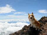 短足だけど富士山に挑戦!愛犬のコーギーと一緒に富士山に登ろう