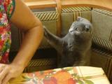 おねだり上手な猫「ねぇねぇ、ちょっとそれどんな味?」