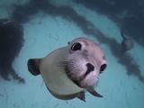 野生のアシカと一緒にダイビング/GoPro: Diving with Ocean Hounds