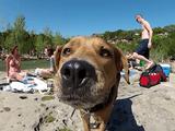 元気いっぱいで幸せそうなワンコたちのどあっぷ映像を次から次へと堪能できるオレ得映像/GoPro Dog Faces