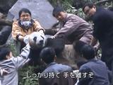 大きくなれ 子パンダたち ~中国臥龍 飼育員の記録~/BS世界のドキュメンタリー