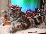 どいてくれない猫に「ゴム乗せ攻撃」で対抗するも、まったく効果がないので諦める飼い主さん