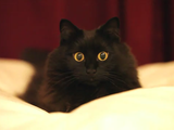 しゃべる猫「しおちゃん」の飼い主さんが解説する「まんまるお目目の撮り方 」