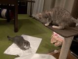 荒ぶる猫と、それを見てドン引きする猫