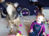 シャボン玉を食べまくる犬と、それを見て爆笑する赤ちゃん
