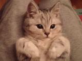 猫「もう好きにすれば良いニャ・・・。」