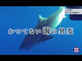 """サメ!凶暴バチ! 温暖化で""""危険生物""""があなたに迫る?/NHK・クローズアップ現代"""