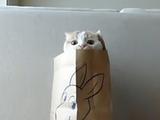 紙袋からピョコピョコ顔をのぞかせる猫のポッケ