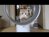 ダイソンの「羽がない扇風機」で輪くぐりする猫(しかもマンチカン)