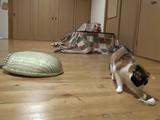 おもちゃのネズミを横取りされてガッカリするザル