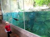 【ほのぼの映像】水族館のカワウソに「駆けっこ」で挑戦した男の子
