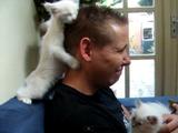 もふもふの白い子猫から猛烈な勢いでスリスリされる男性