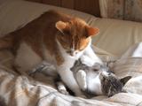 恩を仇で返す子猫