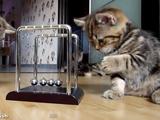 カチカチカチ・・・。物理の法則を勉強する子ネコ