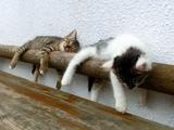 ほっこり癒され映像/気持ち良さそうにスヤスヤ眠る子猫たち