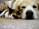 子ネコが寝てる隙に爪を切る。ただそれだけの映像がこんなに癒されるなんて♪/ストレスを与えることなく子猫の爪をトリミングする方法