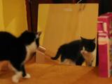 おおっう!ニャンだお前は!? 生まれて初めて鏡に写る自分と対面した子猫