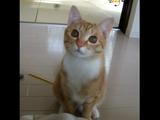 「遊んで」のおねだりが反則的にカワイイ猫のこむぎちゃん