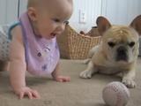 赤ちゃんとフレンチブルドッグが野球のボールを奪い合う、ほのぼの映像(ただし犬には「待て」のハンデ有り)