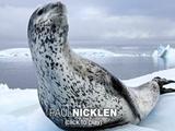 ヒョウアザラシと友達になった写真家/ポール・ニックリン「氷に閉ざされた不思議の国の話」