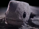 ウミガメの産卵から孵化までを砂を使ったアートで表現したイスラエルのミュージックPVが素敵